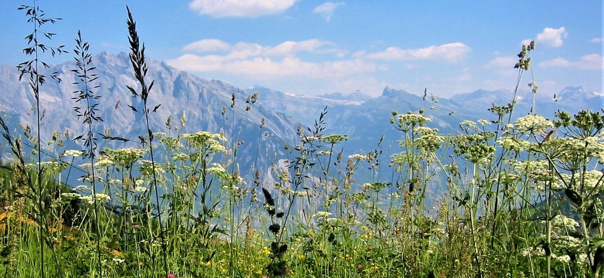 hiking-trail-336603_1280 (2)